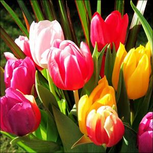 Фото подарков девушке цветы